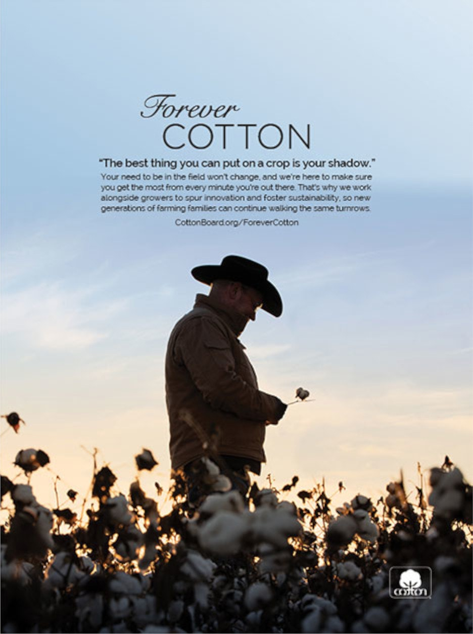 Forever Cotton advertisement developed by Archer Malmo
