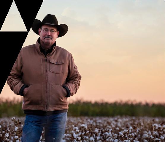 Cotton farmer standing in a cotton field