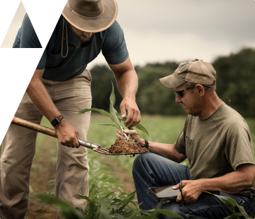 Farmers inspecting a crop in a field